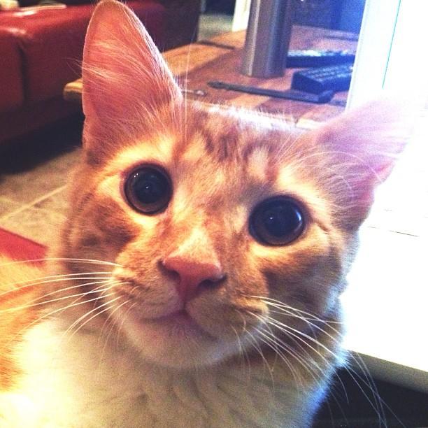 Nacho Cat!