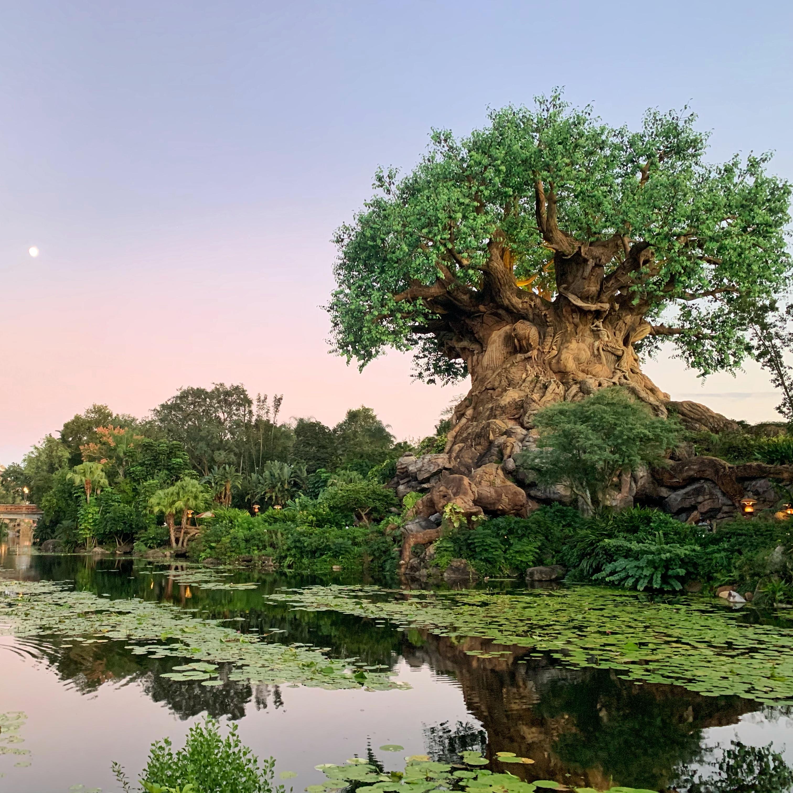 Tree of Life Disney's Animal Kingdom