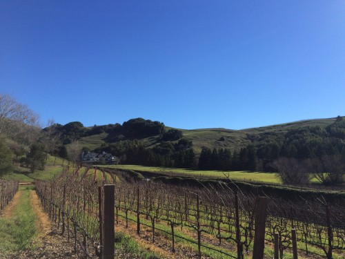 Vineyard at Skywalker Ranch