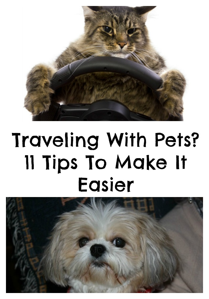 travel advice flying with pets