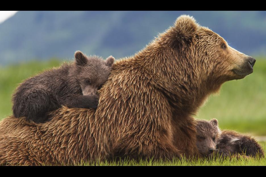 bears52c32d0c2a28a